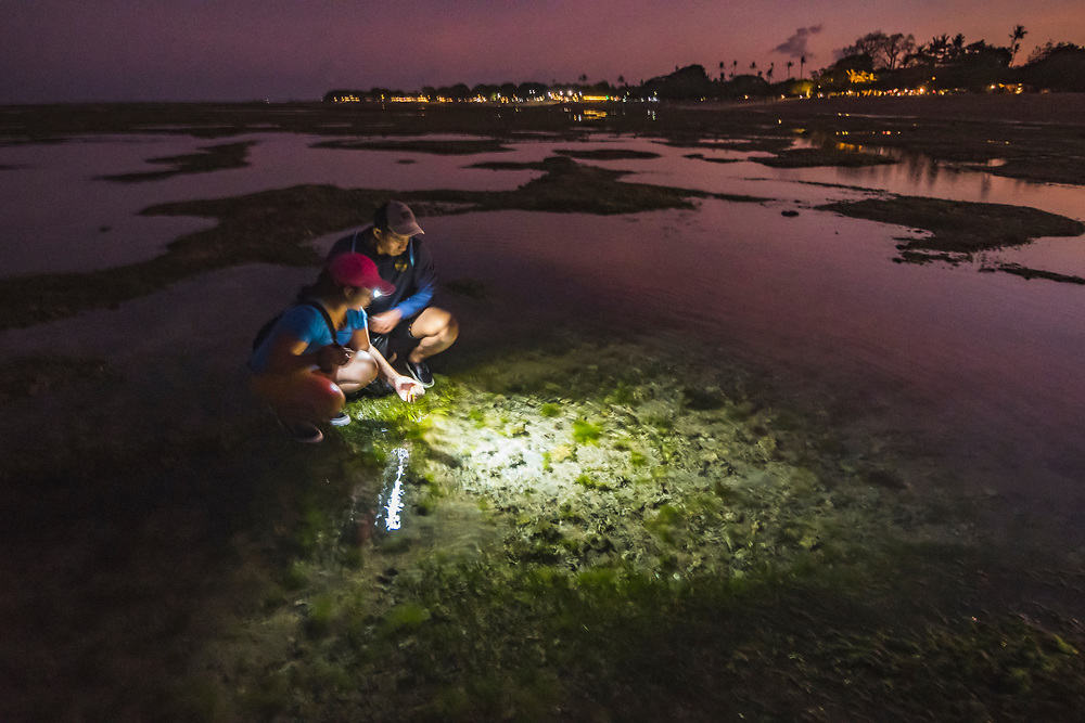 A young couple look for sea urchins and fruit among seagrass beds at low tide in Indonesia.