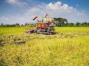15 NOVEMBER 2012 - PATHUM THANI, PATHUM THANI, THAILAND:     PHOTO BY JACK KURTZ