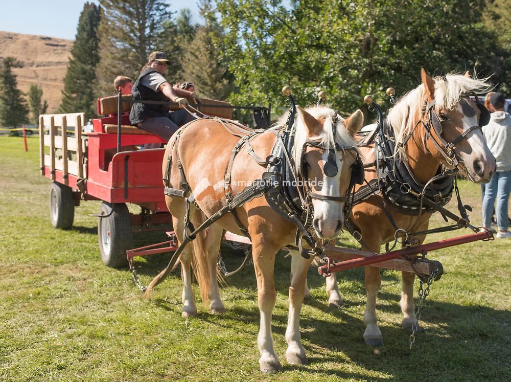 Wagon rides at the Thousand Springs Art Festival at Ritter Island near Hagerman, Idaho.