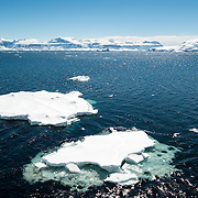 Two sheets of sea ice float on the water on a clear sunny day on the western side of the Antarctic Peninsula.
