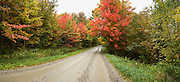 Rural road through Fall colored trees.