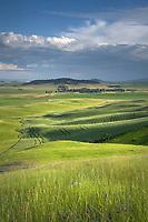View of the Palouse from grassy hillside near Farmington Washington