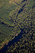 USA, Oregon, aerial landscape of a creek through the forest.