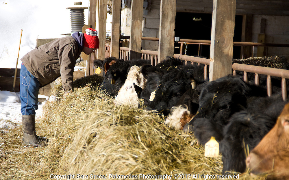 Tod Morgen treats all his animals with care, so after scratching the pigs backs he hanging out with the cows as they happily chewed their homegrown hay.