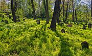 Nowy Wiśnicz 12-05-2019. Cmentarz żydowski w Nowym Wiśniczu, założony w 1616 r. przez Stanisława Lubomirskiego, jest jednym z najstarszych w Polsce. Do dziś zachowało się ok. 250 macew, z czego część z bogatą ornamentyką.