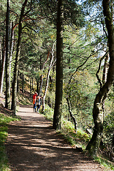 Walkers enjoy a view of Langsett Reservoir from the public footpath through Langsett wood on the North bank Langsett Reservoir which is situated on the Edge of the Peak District