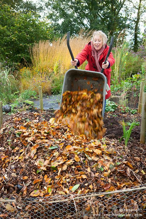 Making leaf mould. Carol Klein emptying wheelbarrow full of leaves onto heap