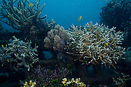 Coral Reef Project, Pemuteran Bay, Bali Indonesia