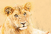 Digitally enhanced image of a lioness Masai Mara, Kenya