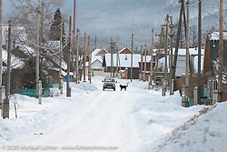 A snowy winter scene in Siberia with a dog in the middle of the street in the small village of Maksimiha. Photographed in Russia during the Baikal Mile Ice Speed Festival. Tuesday, February 25, 2020. Photography ©2020 Michael Lichter.