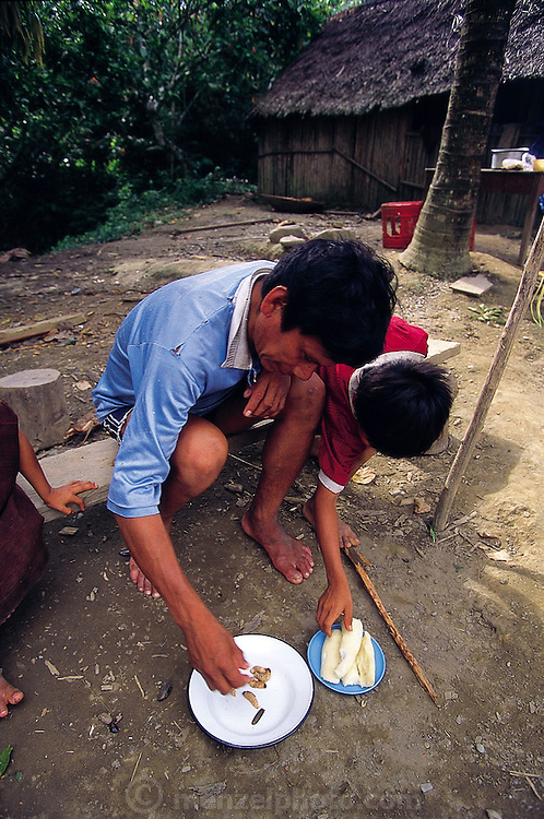 Solomon Mintiani and child (Machigüenga indians) eat sun-warmed raw palm grubs, on the Alta Urubamba River, Yaneriato, Peru. (Man Eating Bugs page 162 Bottom)