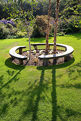 Wooden circular bench seat under three Betula nigra 'Heritage' trees. Colchicum speciosum 'Album' in the centre. River Birch, Red Birch