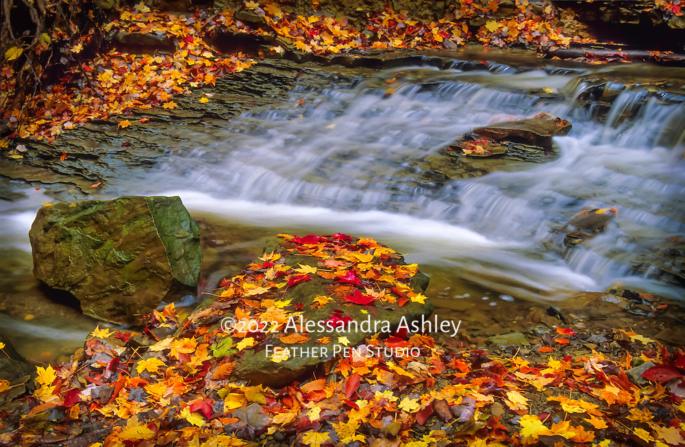 Cascade below Cuyahoga Valley National Park's Blue Hen Falls, complemented by autumn color from fallen leaves. From original film image. Placed as semifinalist, NANPA 2018 Showcase.
