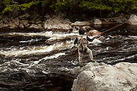 Angler and Guide Matt Horner casting a fly rod while fishing for trout on the Sacandaga River in the Adirondacks, New York.
