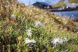 THEMENBILD - eine bunte Blumenwiese in den Alpen. Die Grossglockner Hochalpenstrasse verbindet die beiden Bundeslaender Salzburg und Kaernten mit einer Laenge von 48 Kilometer und ist als Erlebnisstrasse vorrangig von touristischer Bedeutung, aufgenommen am 09. August 2018 in Fusch an der Glocknerstrasse, Österreich // a colorful flower meadow in the alps. The Grossglockner High Alpine Road connects the two provinces of Salzburg and Carinthia with a length of 48 km and is as an adventure road priority of tourist interest, Fusch an der Glocknerstrasse, Austria on 2018/08/09. EXPA Pictures © 2018, PhotoCredit: EXPA/ Stefanie Oberhauser
