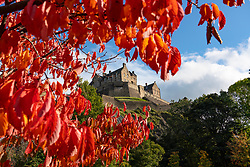 Edinburgh, Scotland, UK. 8 October 2020. Seasonal autumnal red leaves on a tree frame Edinburgh Castle from East Princes Street Gardens on a sunny autumn afternoon. Iain Masterton/Alamy Live News