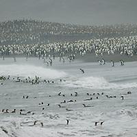 Saint Andrews Bay, South Georgia, Antarctica.