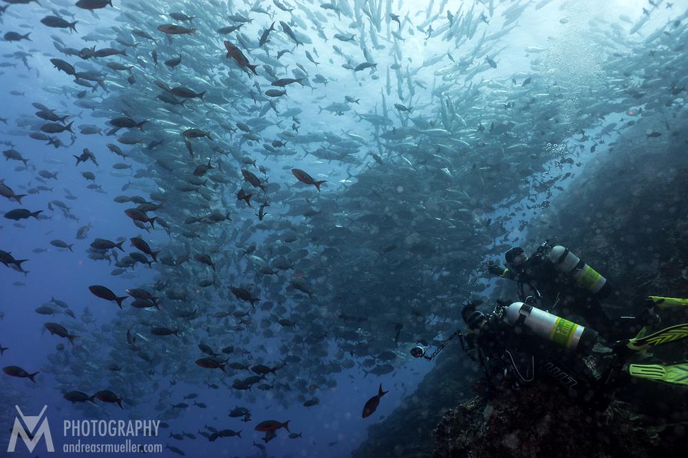 Cocos Island, Dive Spot: Dirty Rock