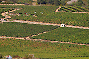 vineyard beaune cote de beaune burgundy france
