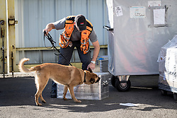 Sniffer dogs testing the material<br /> Departure of the horses to the Rio Olympics from Liege Airport - Liege 2016<br /> © Hippo Foto - Dirk Caremans<br /> 30/07/16