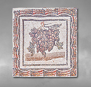 3rd century Roman mosaic panel of black and white grapes. From Thysdrus (El Jem), Tunisia.  The Bardo Museum, Tunis, Tunisia.  Grey background .<br /> <br /> If you prefer to buy from our ALAMY PHOTO LIBRARY  Collection visit : https://www.alamy.com/portfolio/paul-williams-funkystock/roman-mosaic.html - Type -   Bardo    - into the LOWER SEARCH WITHIN GALLERY box. Refine search by adding background colour, place, museum etc<br /> <br /> Visit our ROMAN MOSAIC PHOTO COLLECTIONS for more photos to download  as wall art prints https://funkystock.photoshelter.com/gallery-collection/Roman-Mosaics-Art-Pictures-Images/C0000LcfNel7FpLI
