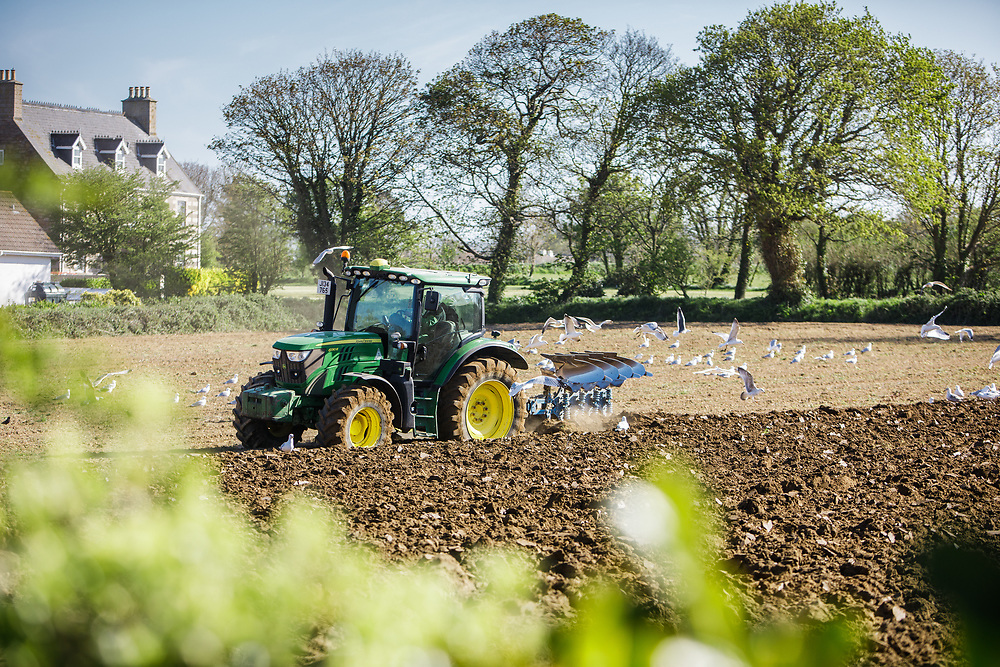 Tractor ploughing fields in the countryside of Jersey, Channel Islands ready to plant crops of Jersey Royal new potatoes in Spring