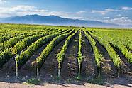 Mendoza: Viticultura