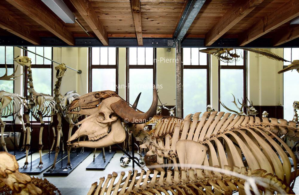 Nederland, Amsterdam ,  23 augustus 2010..Bijzondere plekken op de Universiteit van Amsterdam..Museum Zoologie op Mauritskade 61...Special places at the University of Amsterdam. Museum of Zoology Mauritskade 61.