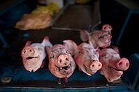 Pigs head on table.