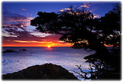 Cypress Tree (Cupressus macrocarpa) at sunset, Point Lobos State Reserve, Carmel, California
