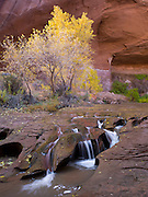 """Erosional cascade on Coyote Creek; Coyote Gulch; Grand Staircase-Escalante National Monument; Kane County, UT;  Lat =  37°24'54.95""""N; Long = 111° 2'1.12""""W"""