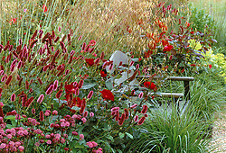 A red border around a seat at Glen Chantry with Sanguisorba menziesii, Rosa 'Dusky Maiden' and Astrantia 'Hadspen Blood'. Design: Sue and Wol Staines