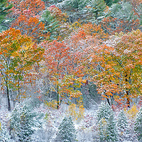 Massachusetts Snowliage at the along the banks of the Wachusett Reservoir in West Boylston of Central Massachusetts. <br /> <br /> Massachusetts Snow foliage photography images are available as museum quality photo, canvas, acrylic, wood or metal prints. Wall art prints may be framed and matted to the individual liking and interior design decoration needs:<br /> <br /> https://juergen-roth.pixels.com/featured/massachusetts-snowliage-juergen-roth.html<br /> <br /> Good light and happy photo making!<br /> <br /> My best,<br /> <br /> Juergen