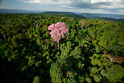 Parauapebas_PA, 03 de Agosto de 2011...Imagens da Floresta Nacional de Carajas...FOTO: JOAO MARCOS ROSA / NITRO