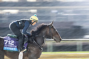 November 1-3, 2018: Breeders' Cup Horse Racing World Championships. Topper T