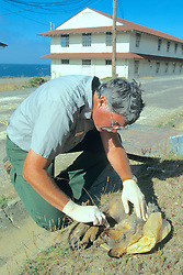 Judd Howell Investigating A Deceased Gray Fox