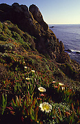 Point Lobos, Monterrey, California<br />