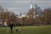 With the Shard and other City buildings in the background, a pet dogs walker in Lambeths Ruskin Park, on 11th February 2019, in London, England.