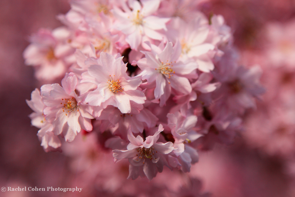"""Truly Delightful"" 2<br /> <br /> Flowers by Rachel Cohen"