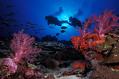 Thailand, Myanmar, Andaman Is. Marine Life (Andaman Sea)