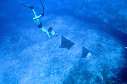 Peter Zuccarini Filming Spotted Eagle Rays