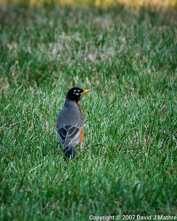 Early Spring; Evening; Backyard; Wildlife