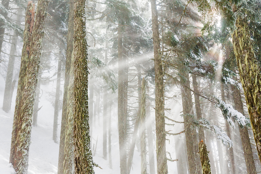 Sun rays pierce through the fog into a conifer forest on Baring Mountain, Wild Sky Wilderness, Washington.