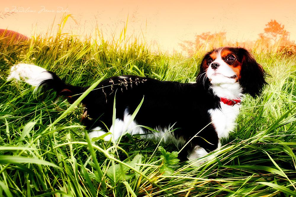 Rembrandt's Dog