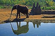 Pittsburgh Zoo, Elephant, African Savanna, Pittsburgh, PA