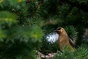 Wildlife photography from Grande Prairie, AB, Canada