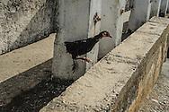 Yumuri , Cuba 2013.