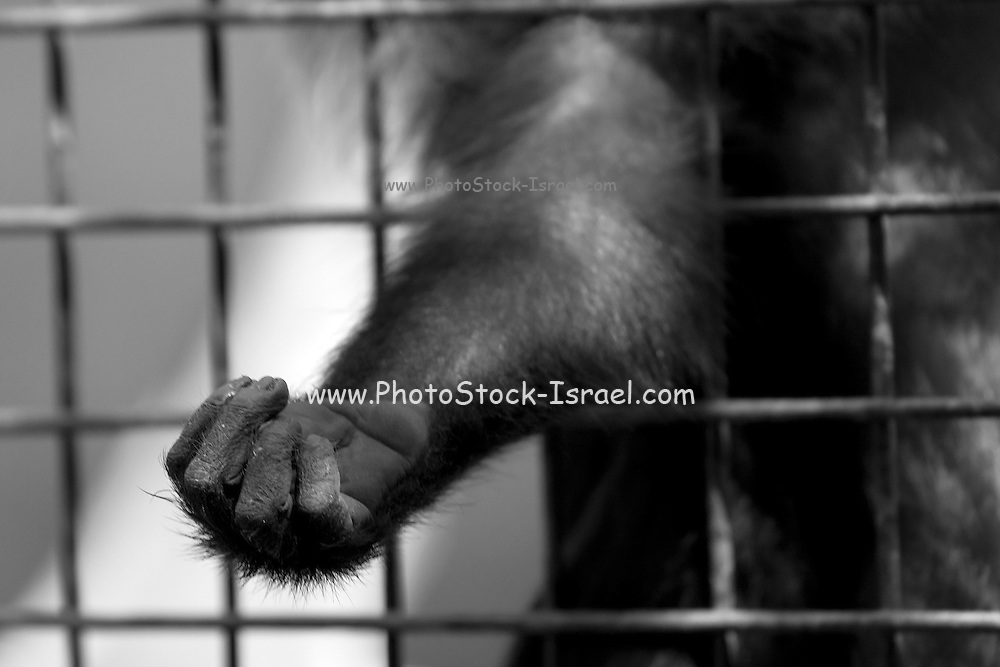 Monkey's hand through the cage