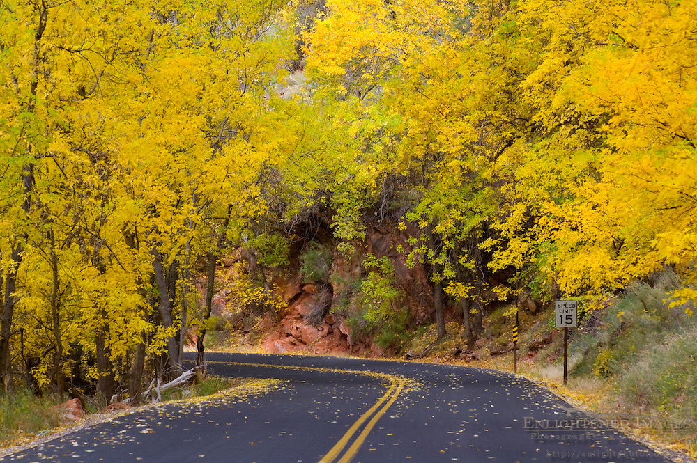 Fall foliage on trees along road in Zion Canyon, Zion National Park, Utah