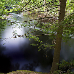Hemlock trees on the banks of the Ipswich River at the Essex County Greenbelt Association's Julia Bird Reservation in Ipswich, Massachusetts.
